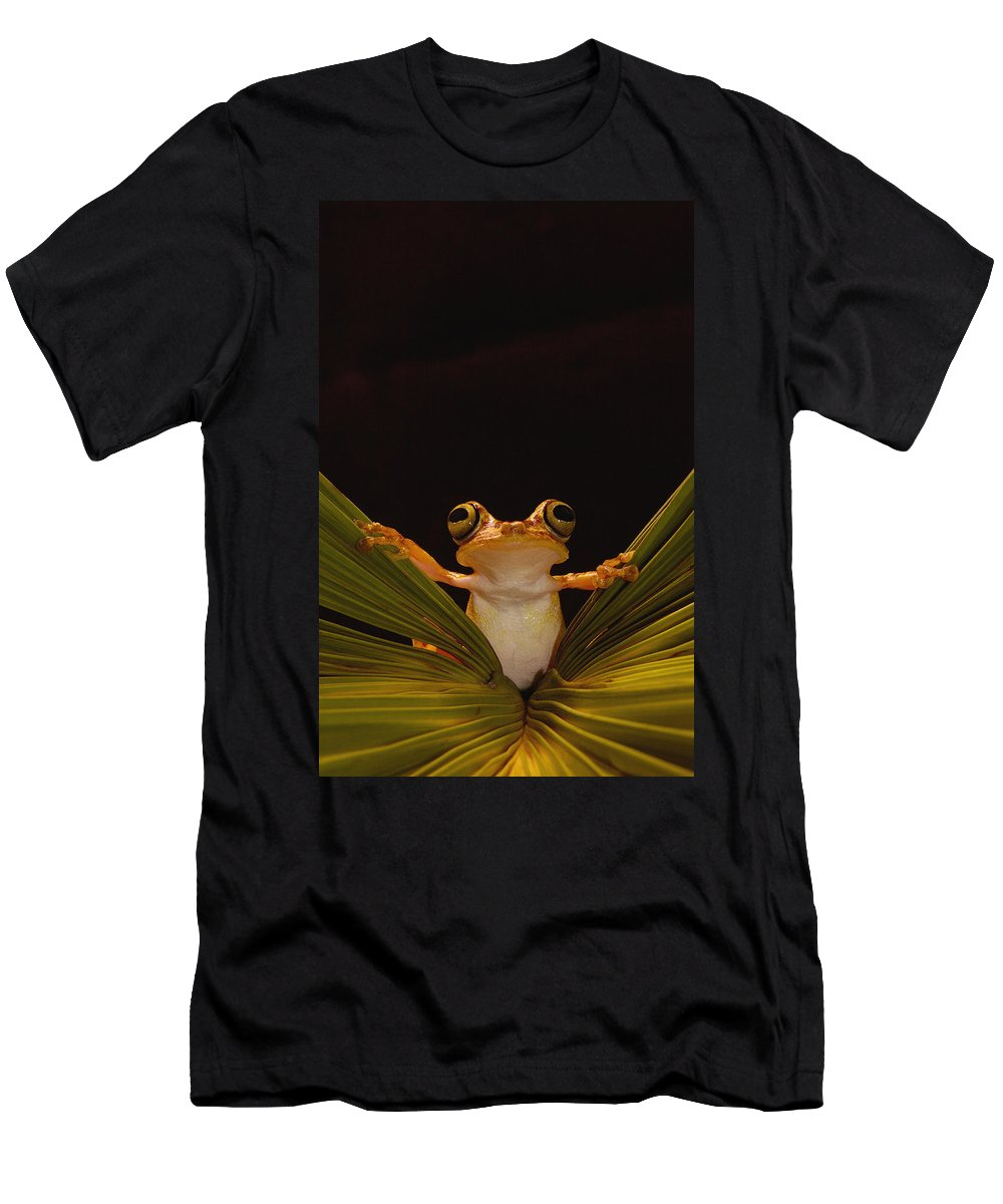 Feb0514 Men's T-Shirt (Athletic Fit) featuring the photograph Chachi Tree Frog Ecuador by Pete Oxford