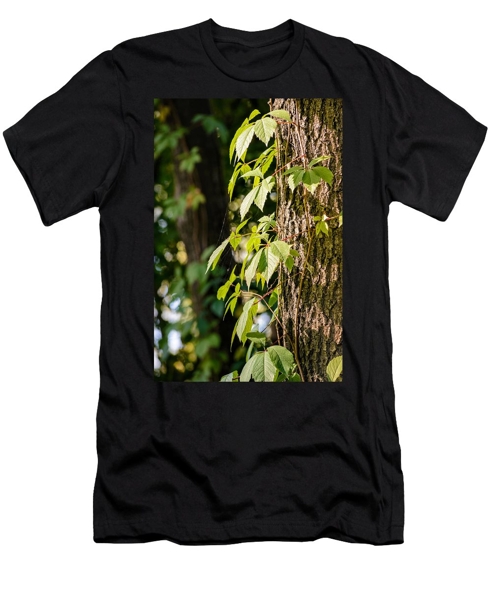 Autumn Men's T-Shirt (Athletic Fit) featuring the photograph Creeper Leaves Under The Sun by Alain De Maximy