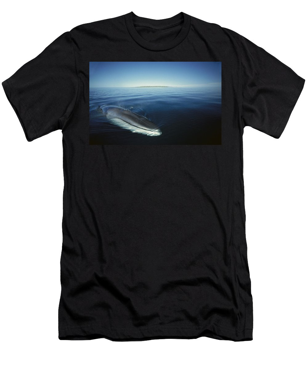 Feb0514 Men's T-Shirt (Athletic Fit) featuring the photograph Fin Whale In Sea Of Cortez by Tui De Roy