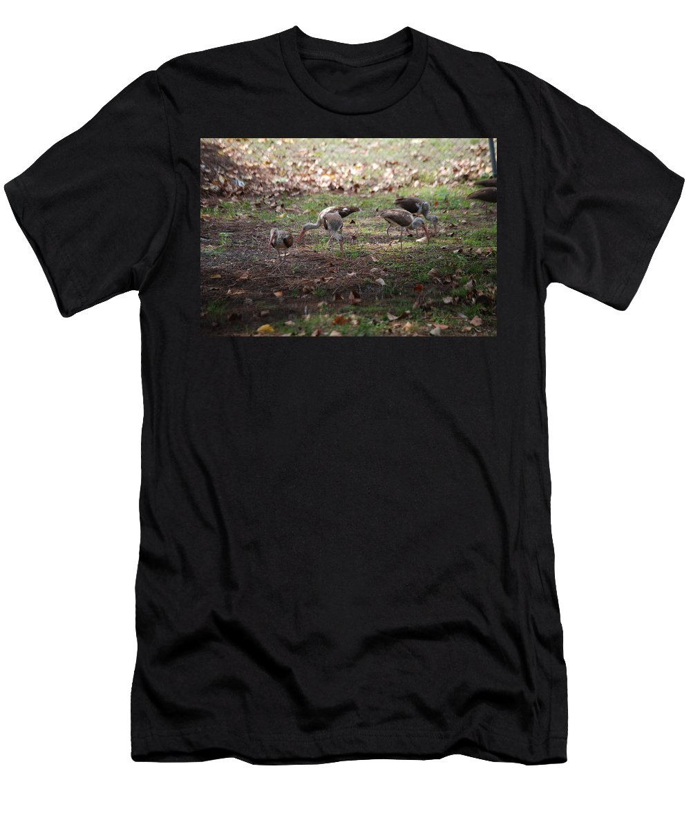 Digging For Bugs Men's T-Shirt (Athletic Fit) featuring the photograph Juvenile Ibis by Robert Floyd