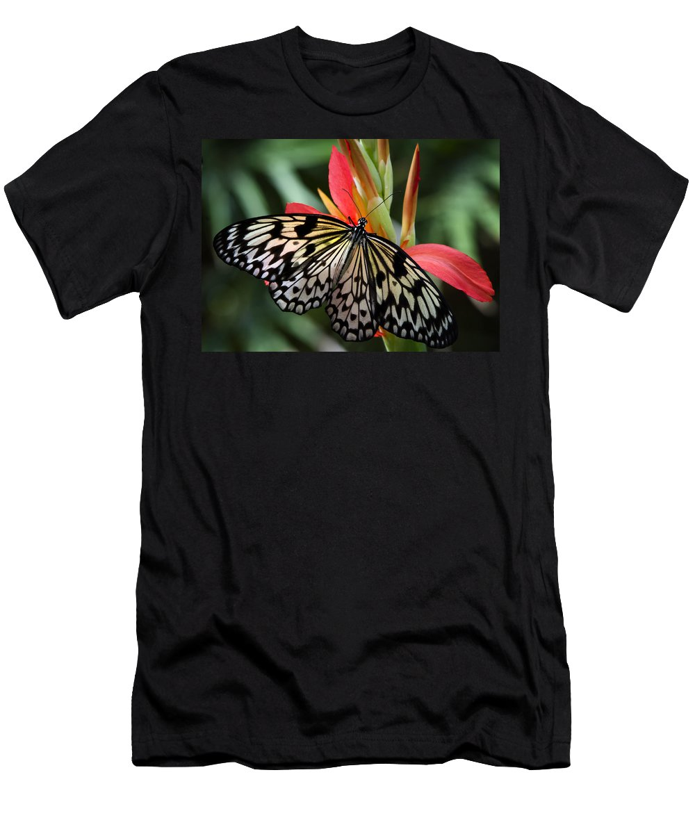 Paper Kite Butterfly Men's T-Shirt (Athletic Fit) featuring the photograph Nature's Treasures by Saija Lehtonen