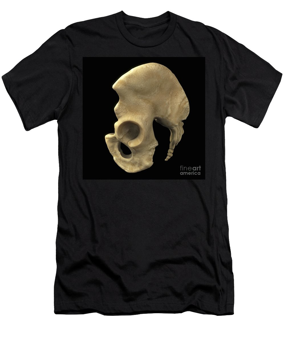 3d Visualisation Men's T-Shirt (Athletic Fit) featuring the photograph Pelvic Bones Male by Science Picture Co