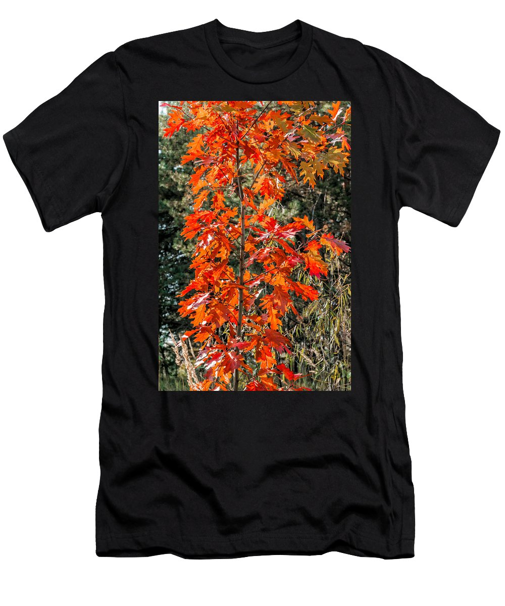 Autumn Men's T-Shirt (Athletic Fit) featuring the photograph Red Leaves by Alain De Maximy