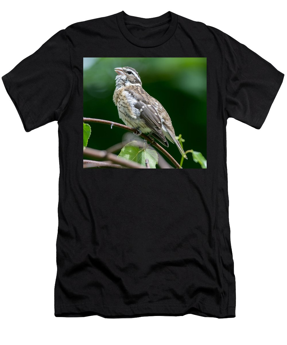 Bird Men's T-Shirt (Athletic Fit) featuring the photograph Rose-breasted Grosbeak by Richard Kitchen