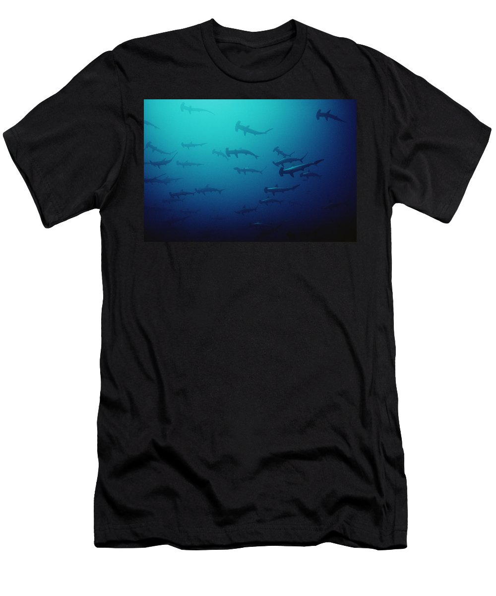 Feb0514 Men's T-Shirt (Athletic Fit) featuring the photograph Scalloped Hammerhead Shark School Cocos by Flip Nicklin