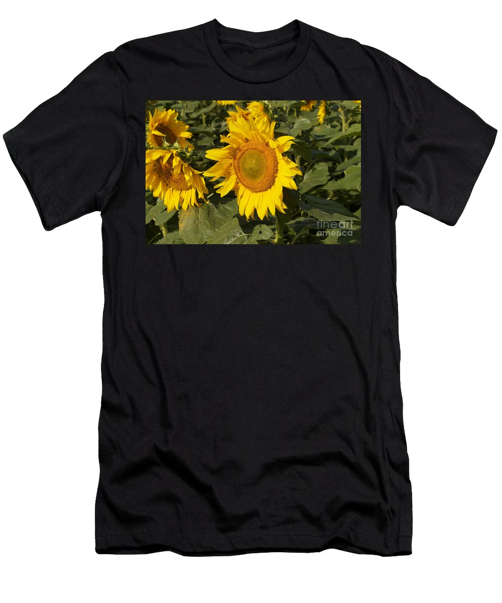 Yellow Men's T-Shirt (Athletic Fit) featuring the photograph Sun Flower by William Norton