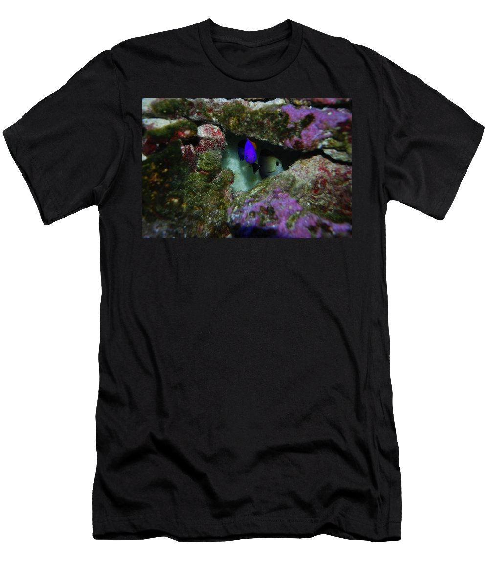 Taken Through Side Of Aquarium Men's T-Shirt (Athletic Fit) featuring the photograph Tropical Fish In Cave by Robert Floyd