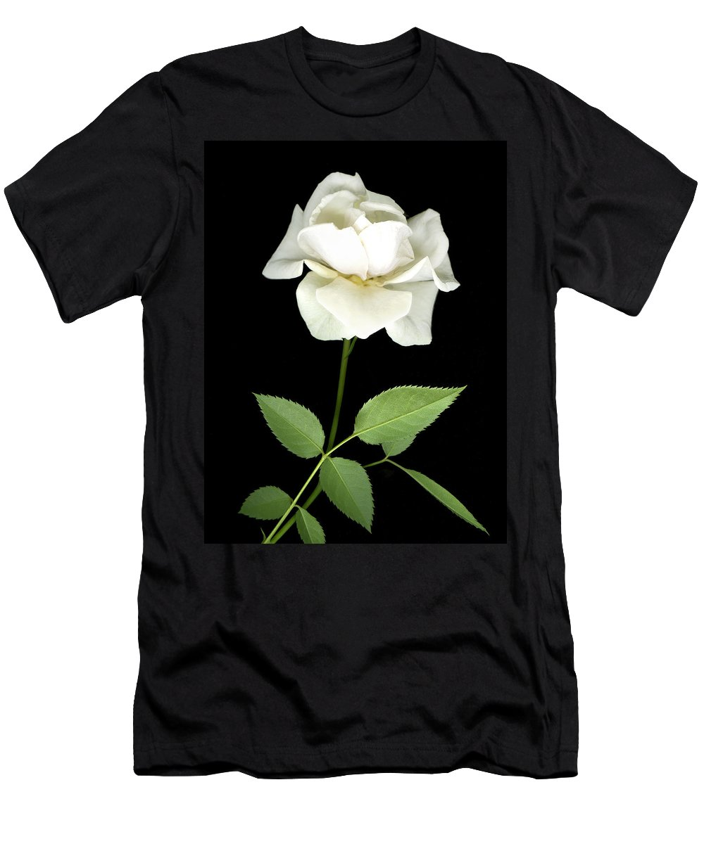 Roses Men's T-Shirt (Athletic Fit) featuring the photograph White Rose by Jim Smith