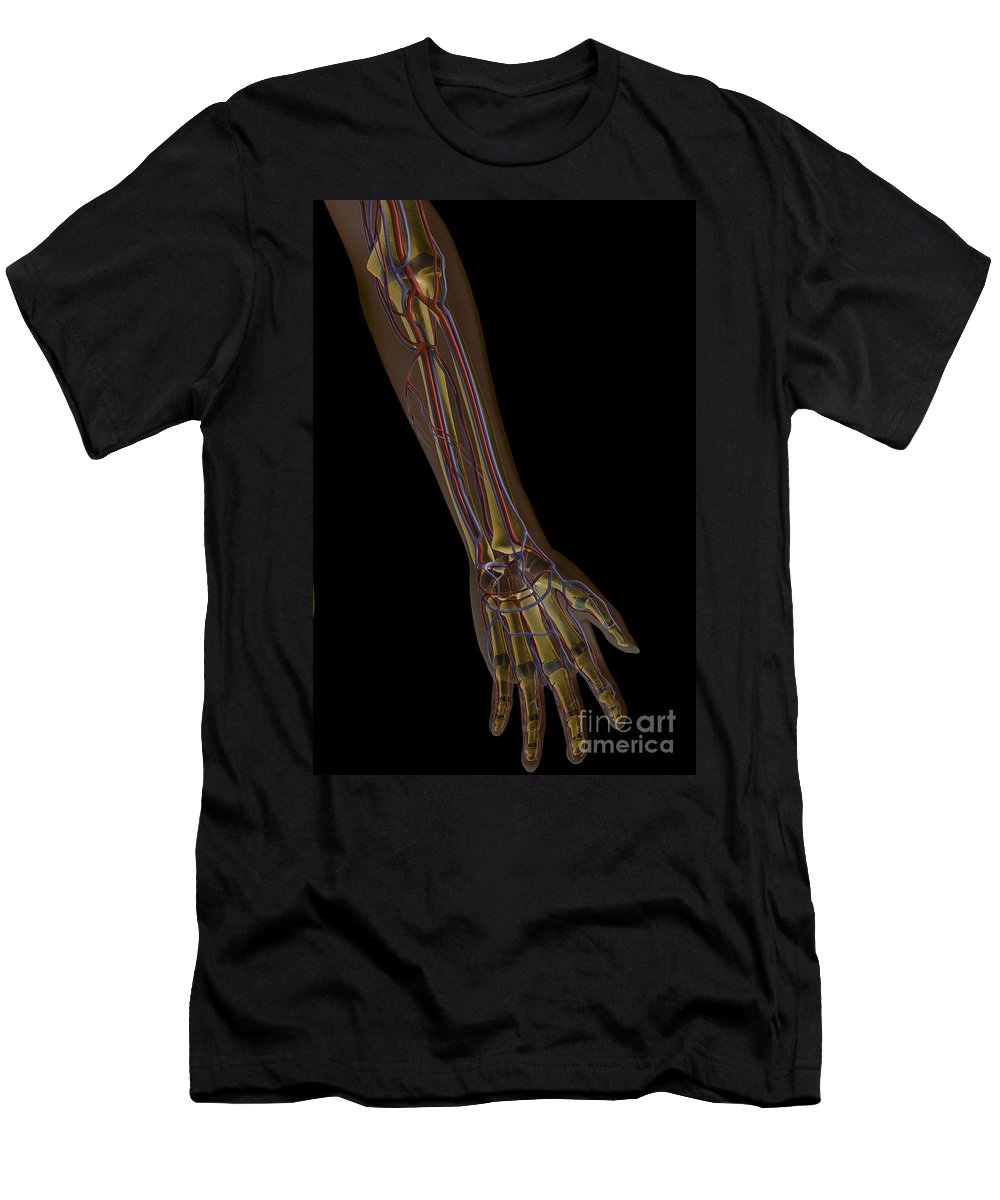 Transparent Men's T-Shirt (Athletic Fit) featuring the photograph The Cardiovascular System by Science Picture Co