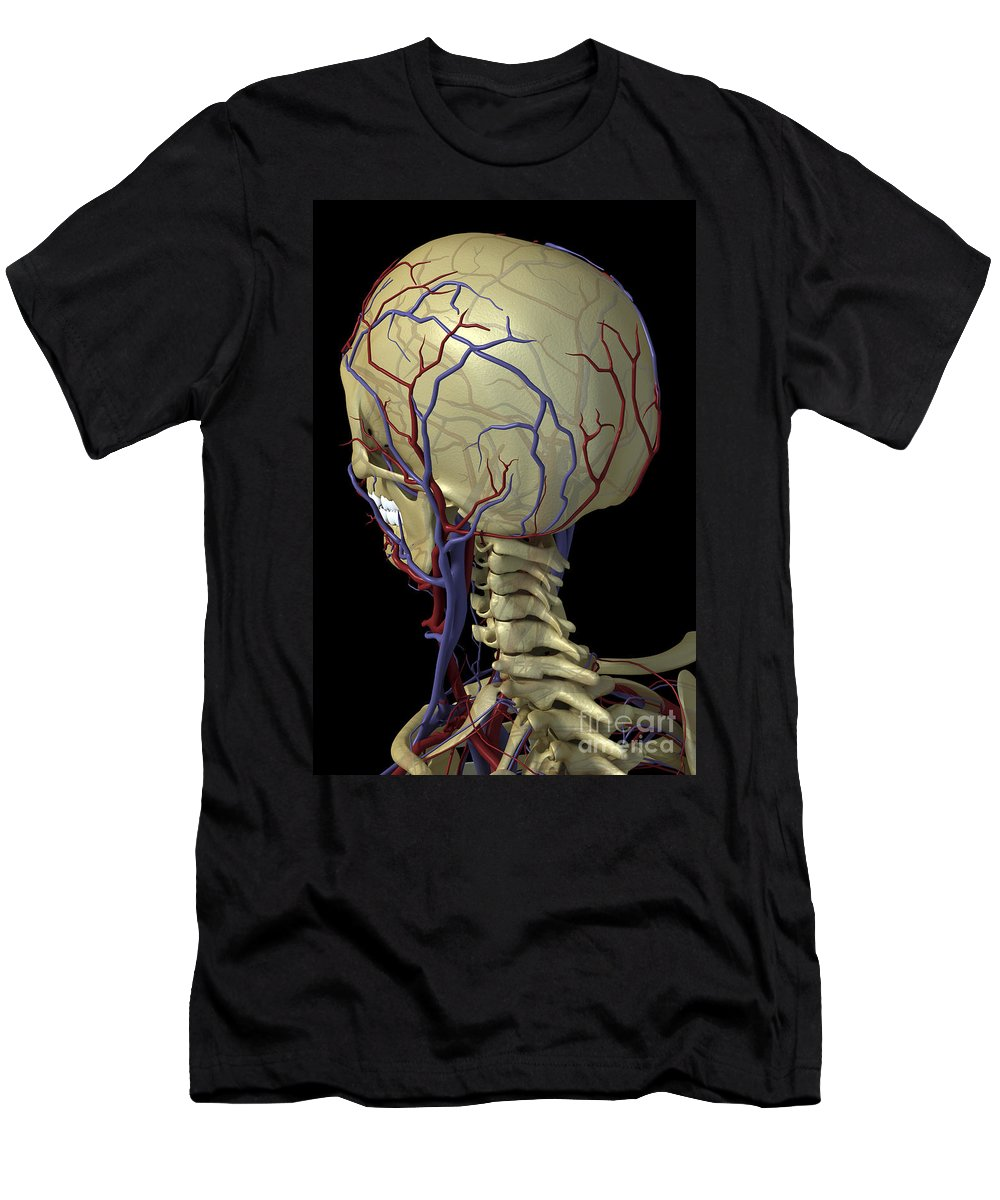 Blood Vessels Men's T-Shirt (Athletic Fit) featuring the photograph The Cardiovascular System by Science Picture Co