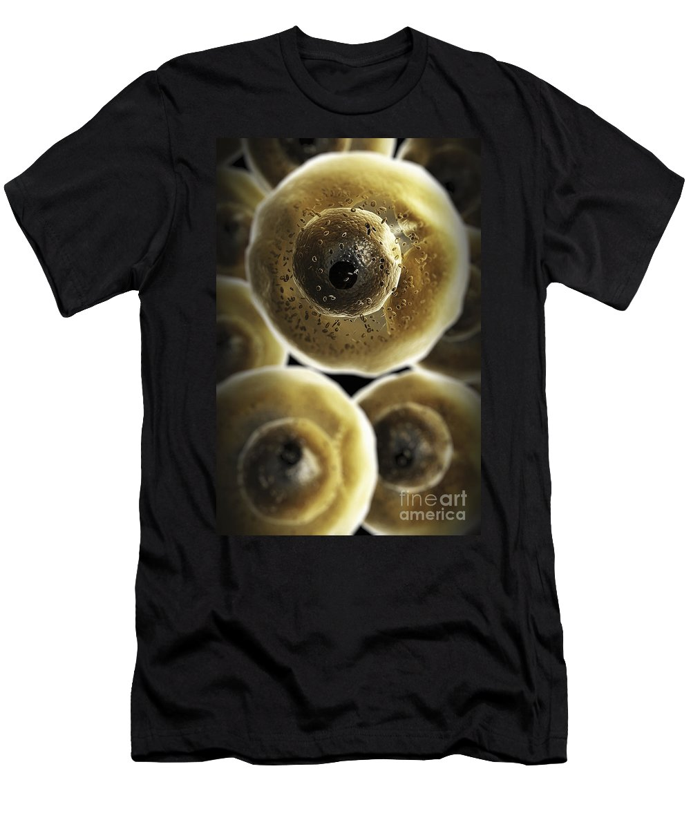 Human Anatomy Men's T-Shirt (Athletic Fit) featuring the photograph B Cells by Science Picture Co