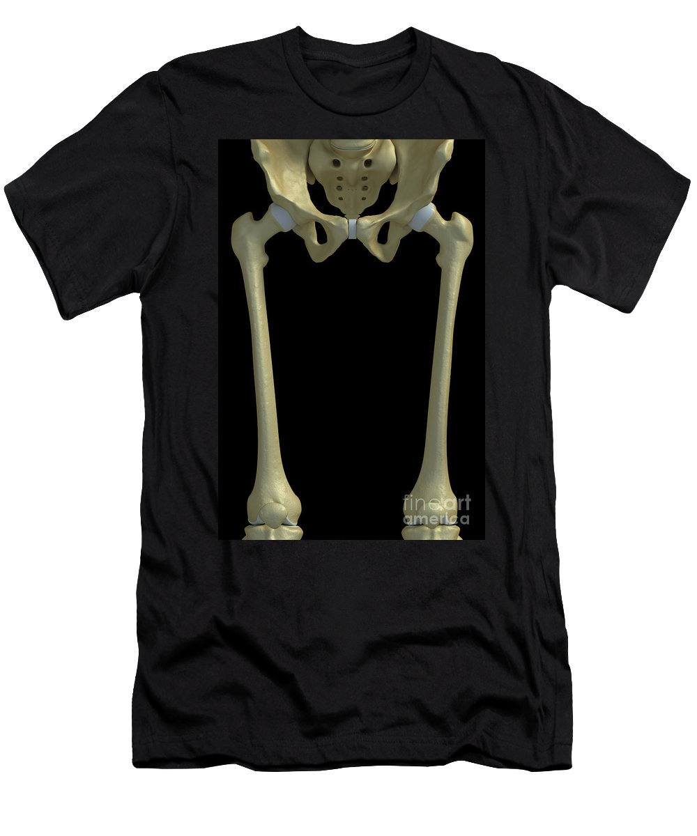 Human Body Men's T-Shirt (Athletic Fit) featuring the photograph Bones Of The Upper Legs by Science Picture Co