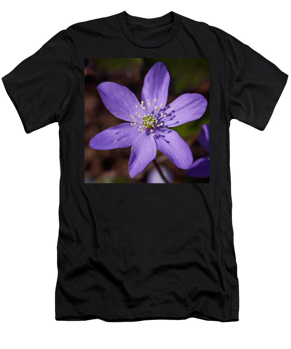 Lehto Men's T-Shirt (Athletic Fit) featuring the photograph Common Hepatica by Jouko Lehto