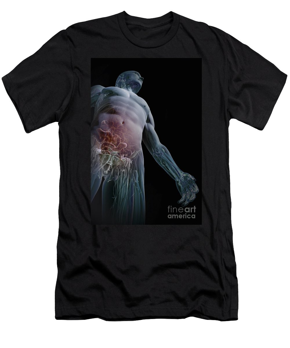 Biomedical Illustration Men's T-Shirt (Athletic Fit) featuring the photograph Human Anatomy by Science Picture Co