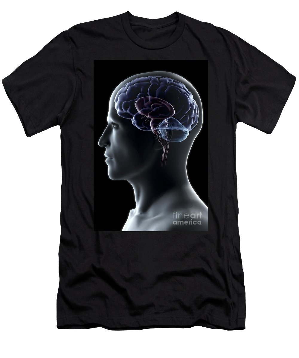 Brain Hemisphere Men's T-Shirt (Athletic Fit) featuring the photograph Human Brain by Science Picture Co