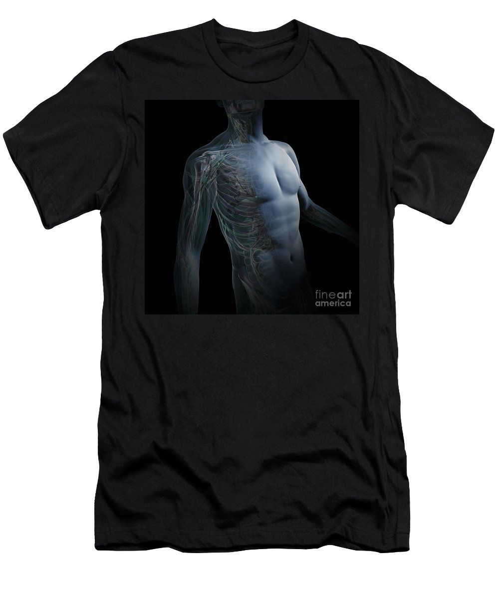 Digitally Generated Image Men's T-Shirt (Athletic Fit) featuring the photograph Human Anatomy by Science Picture Co