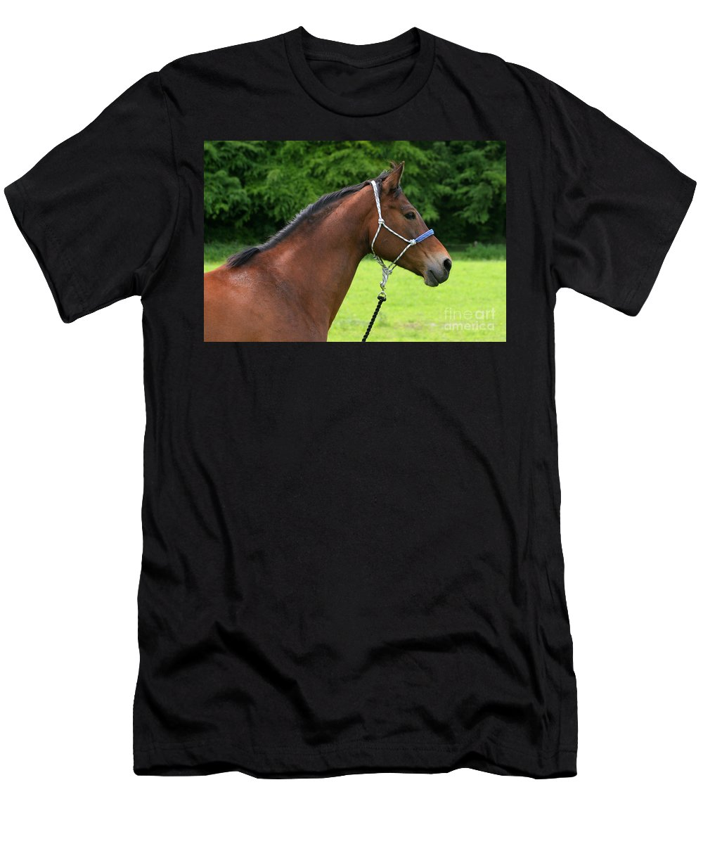 Bay Horse Men's T-Shirt (Athletic Fit) featuring the photograph Horse Portrait by Angel Ciesniarska