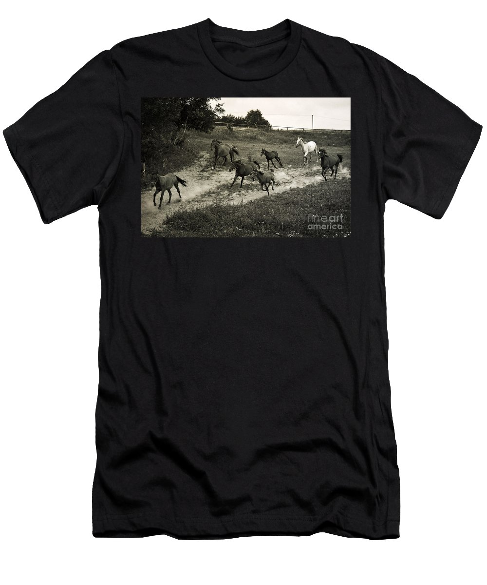 Horses Men's T-Shirt (Athletic Fit) featuring the photograph Running Free by Angel Ciesniarska