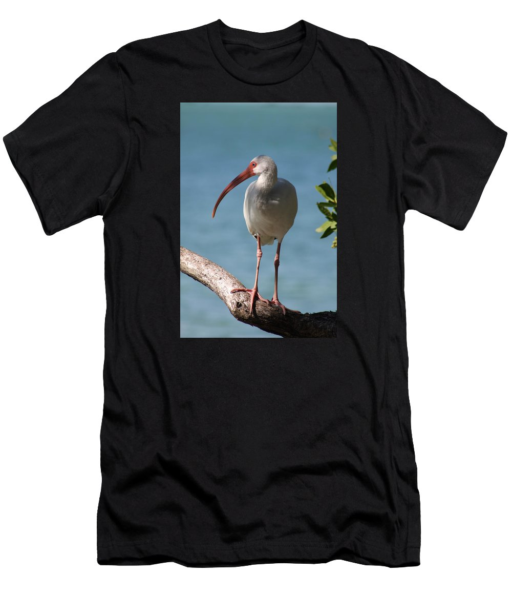 Ibis Men's T-Shirt (Athletic Fit) featuring the photograph Waiting by Christiane Schulze Art And Photography