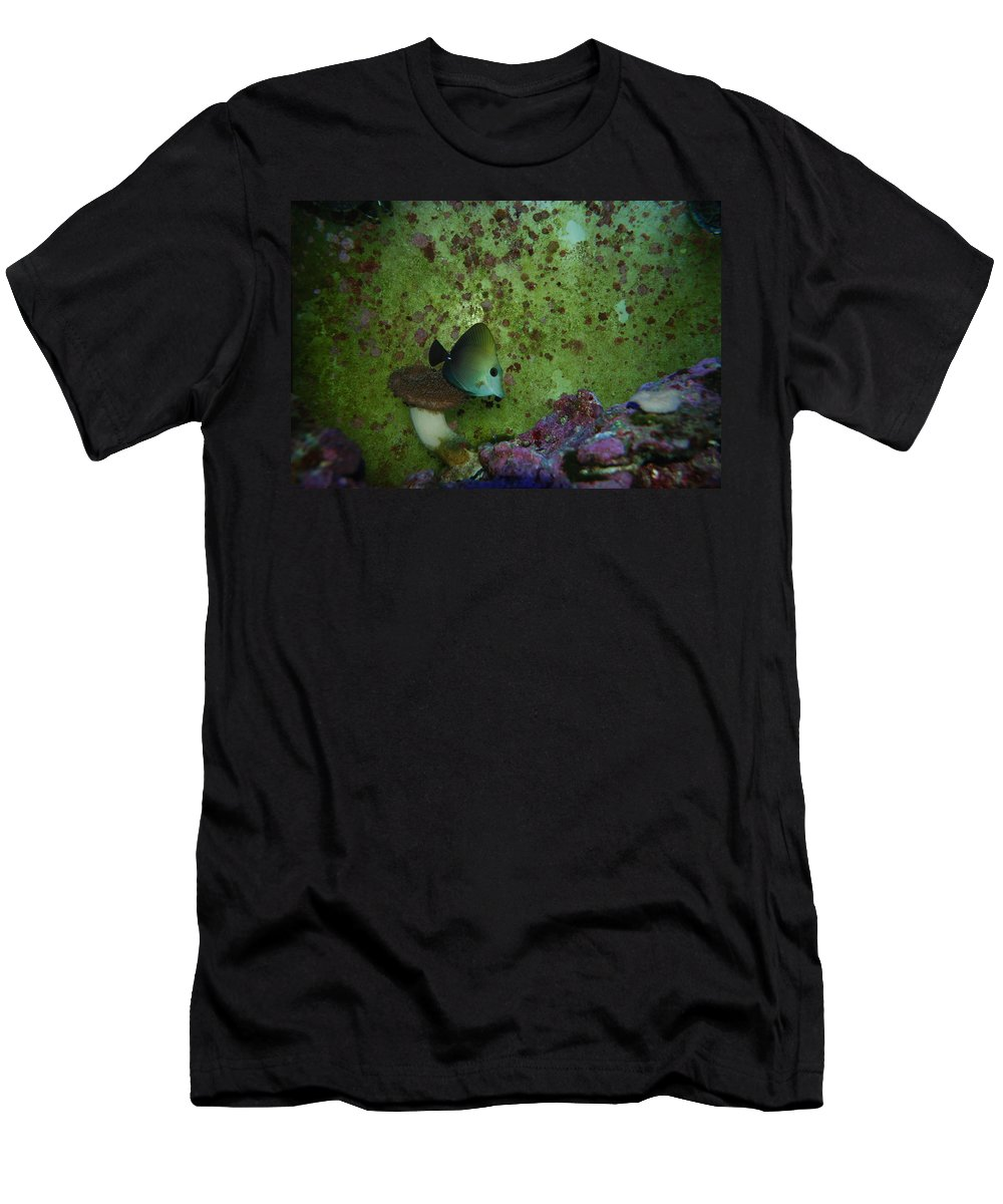 Taken Through Side Of Aquarium Men's T-Shirt (Athletic Fit) featuring the photograph Tropical Fish And Coral by Robert Floyd