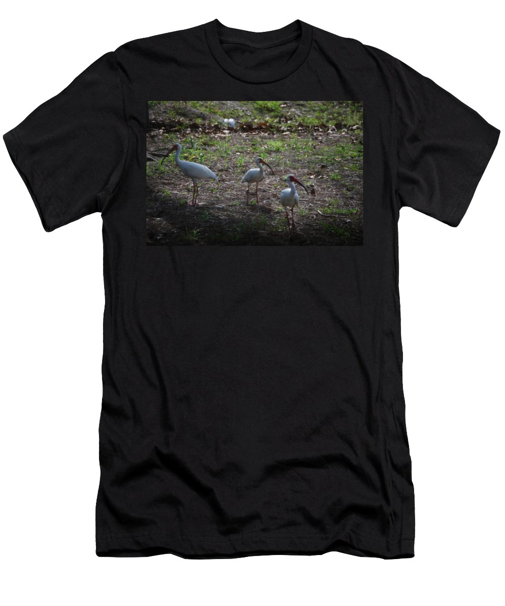 Hunt In Groups Men's T-Shirt (Athletic Fit) featuring the photograph White Ibis by Robert Floyd
