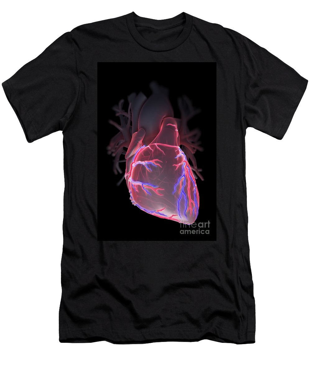 Internal Organ Men's T-Shirt (Athletic Fit) featuring the photograph Human Heart by Science Picture Co
