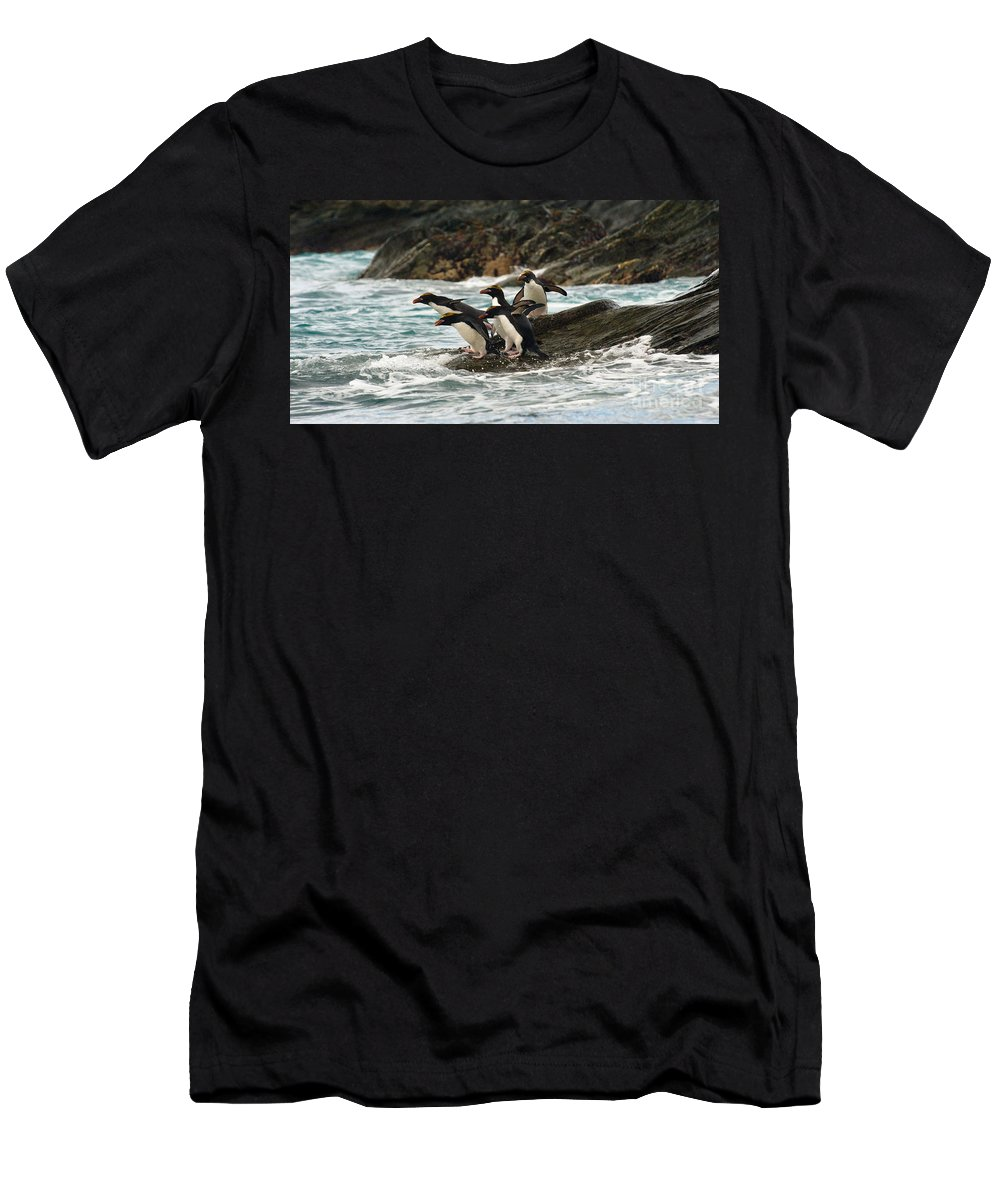 Animal Men's T-Shirt (Athletic Fit) featuring the photograph Macaroni Penguin by John Shaw