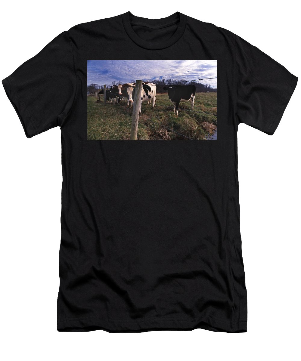 Farm Men's T-Shirt (Athletic Fit) featuring the photograph A Lot Of Bulls by Skip Willits