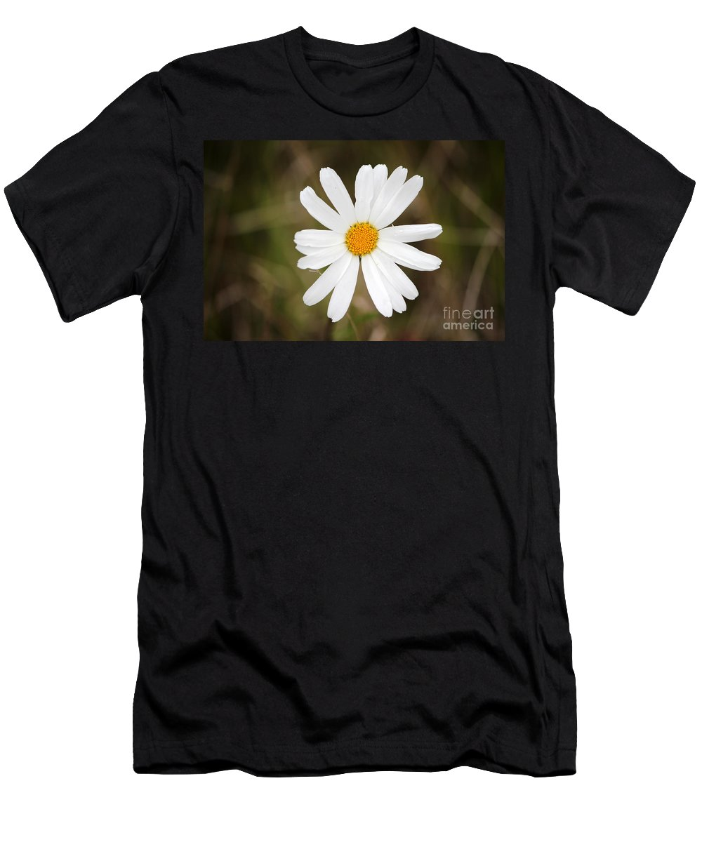 Daisy Men's T-Shirt (Athletic Fit) featuring the photograph A Rain Spattered Daisy by Stacey May