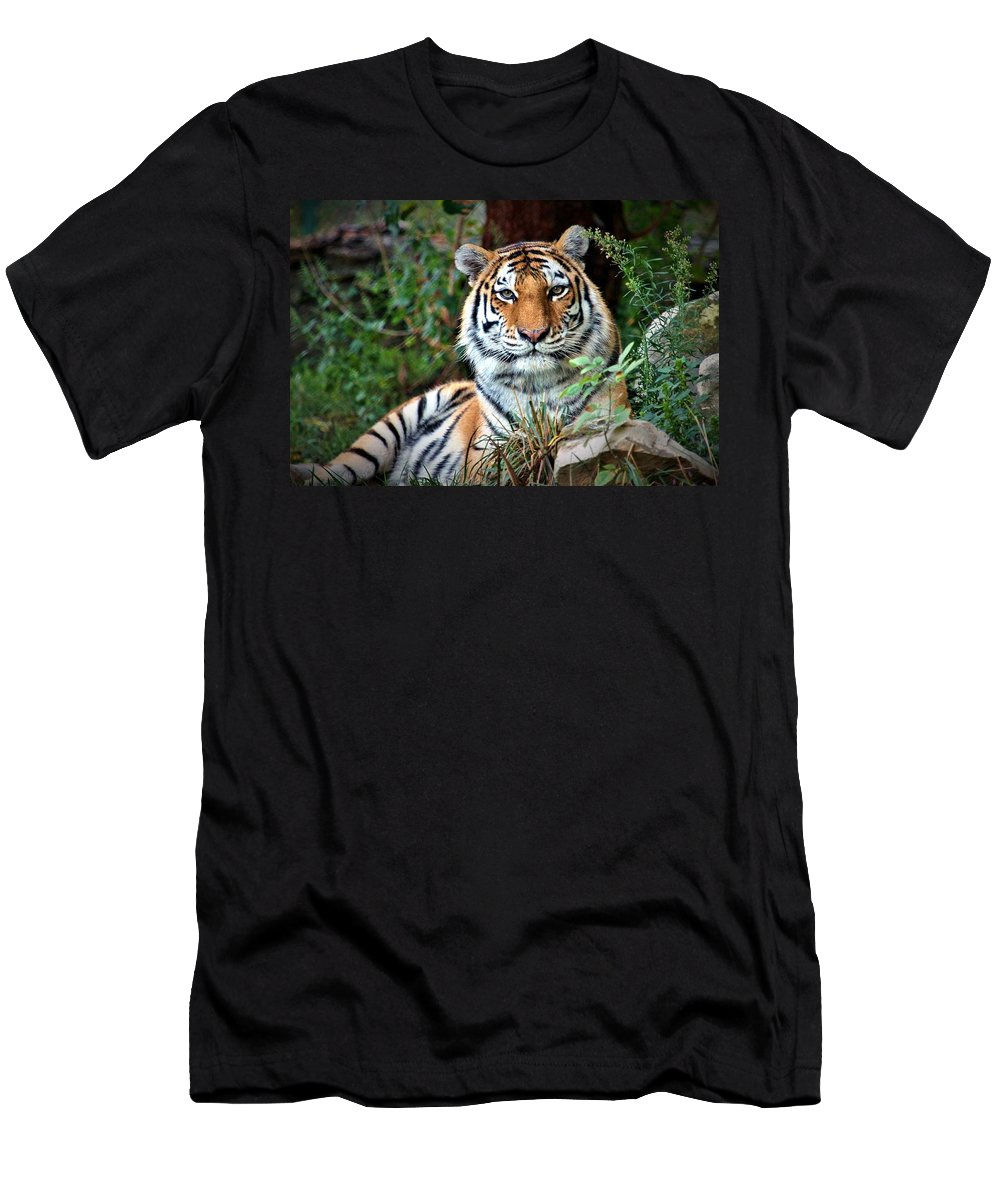 Amur Tiger Men's T-Shirt (Athletic Fit) featuring the photograph A Tigers Glance by Christopher Miles Carter