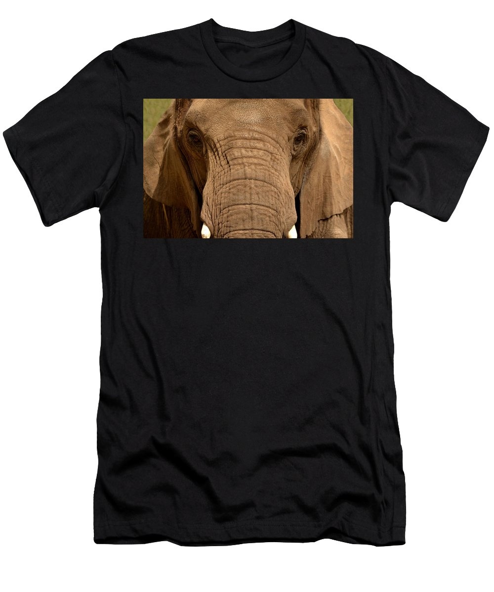 Elephant Men's T-Shirt (Athletic Fit) featuring the photograph African Elephant by Nadalyn Larsen