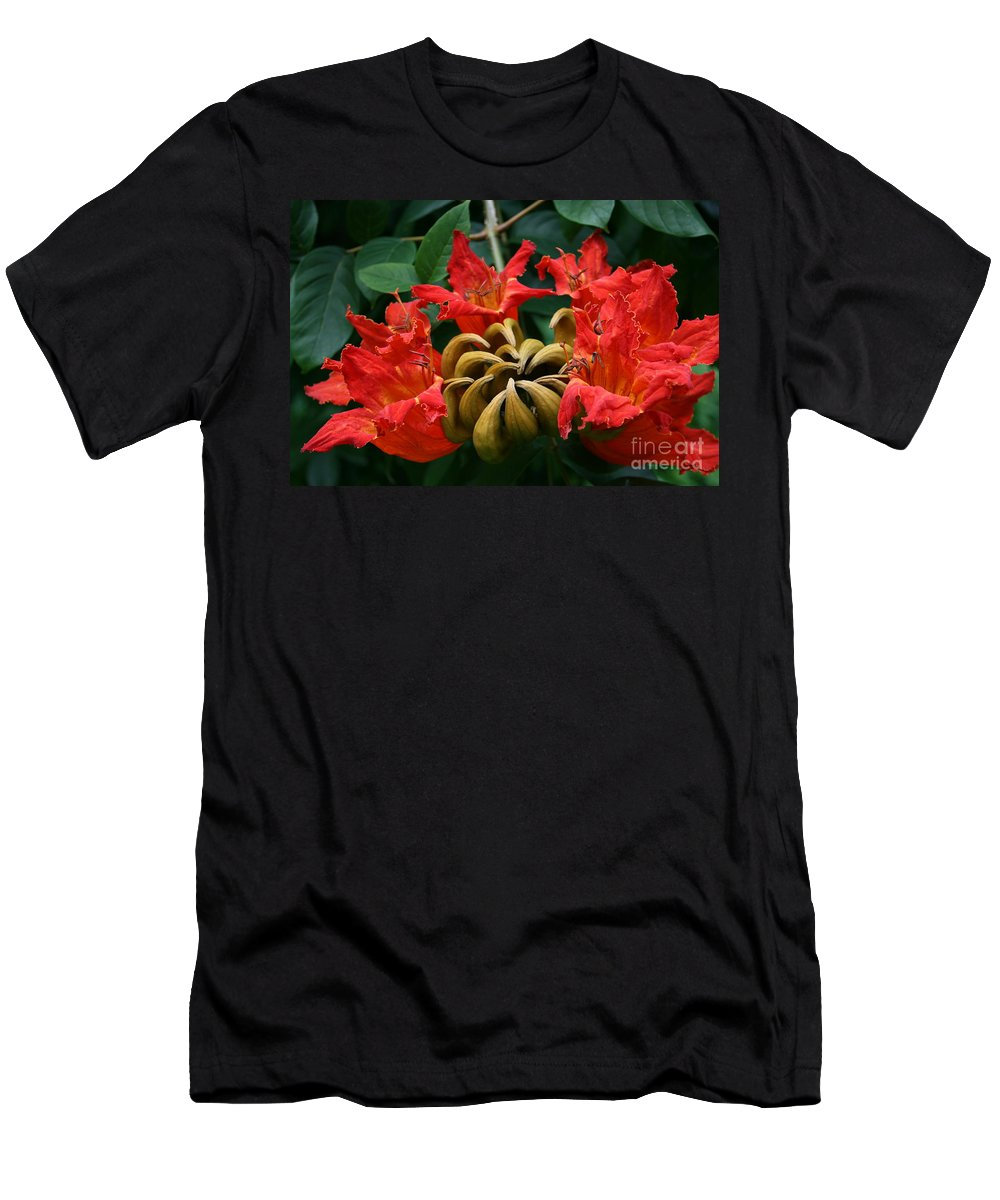 Aloha Men's T-Shirt (Athletic Fit) featuring the photograph African Tulip Tree by Sharon Mau