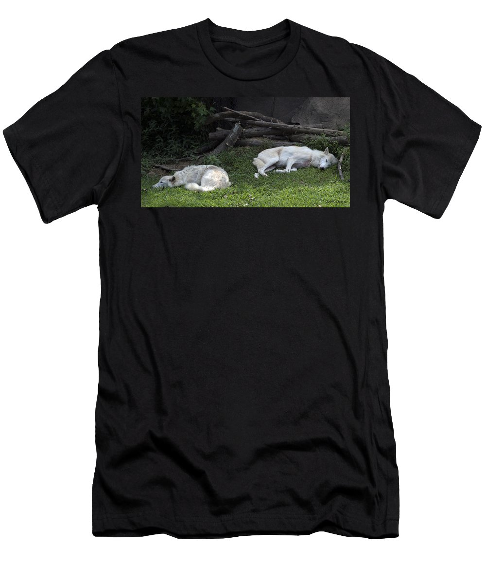 Wolf Men's T-Shirt (Athletic Fit) featuring the photograph After A Long Night by John Dauer
