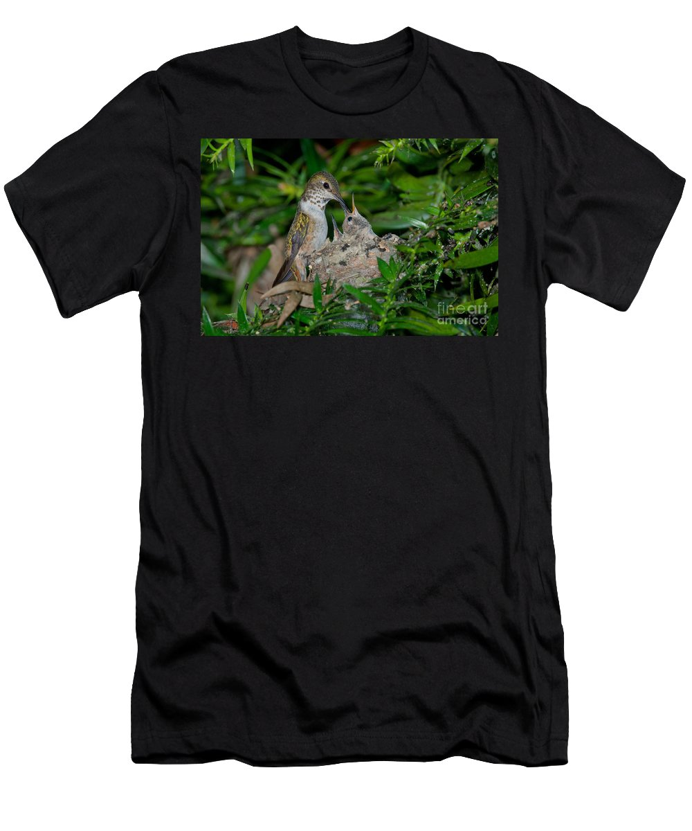 Animal Men's T-Shirt (Athletic Fit) featuring the photograph Allens Hummingbird Feeds Young by Anthony Mercieca