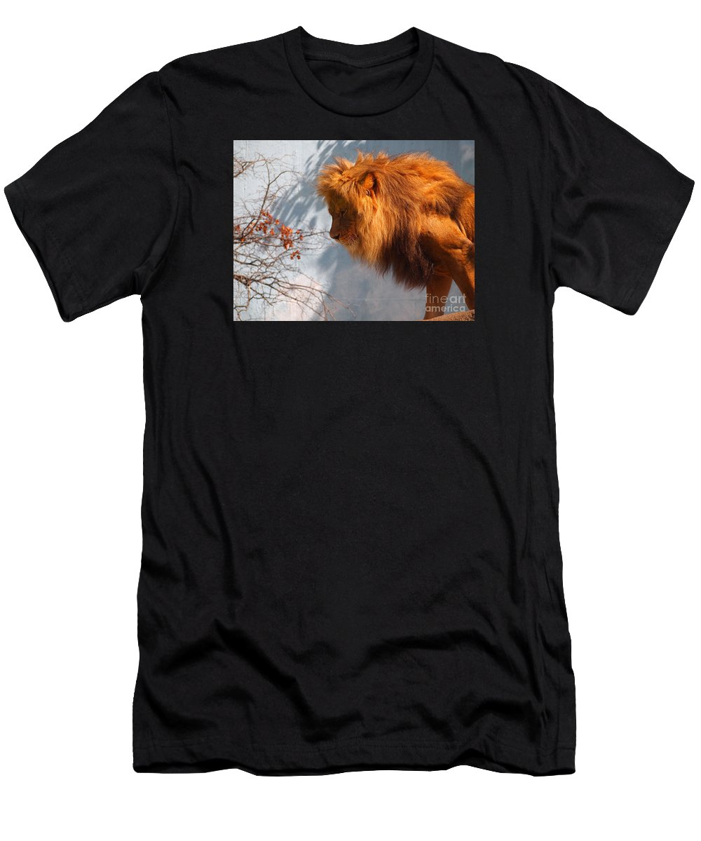 Lion Men's T-Shirt (Athletic Fit) featuring the photograph Amazing Male Lion by Jennifer Craft