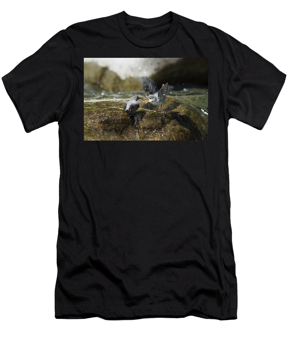 Feb0514 Men's T-Shirt (Athletic Fit) featuring the photograph American Dipper Feeding Young Costa Rica by Konrad Wothe