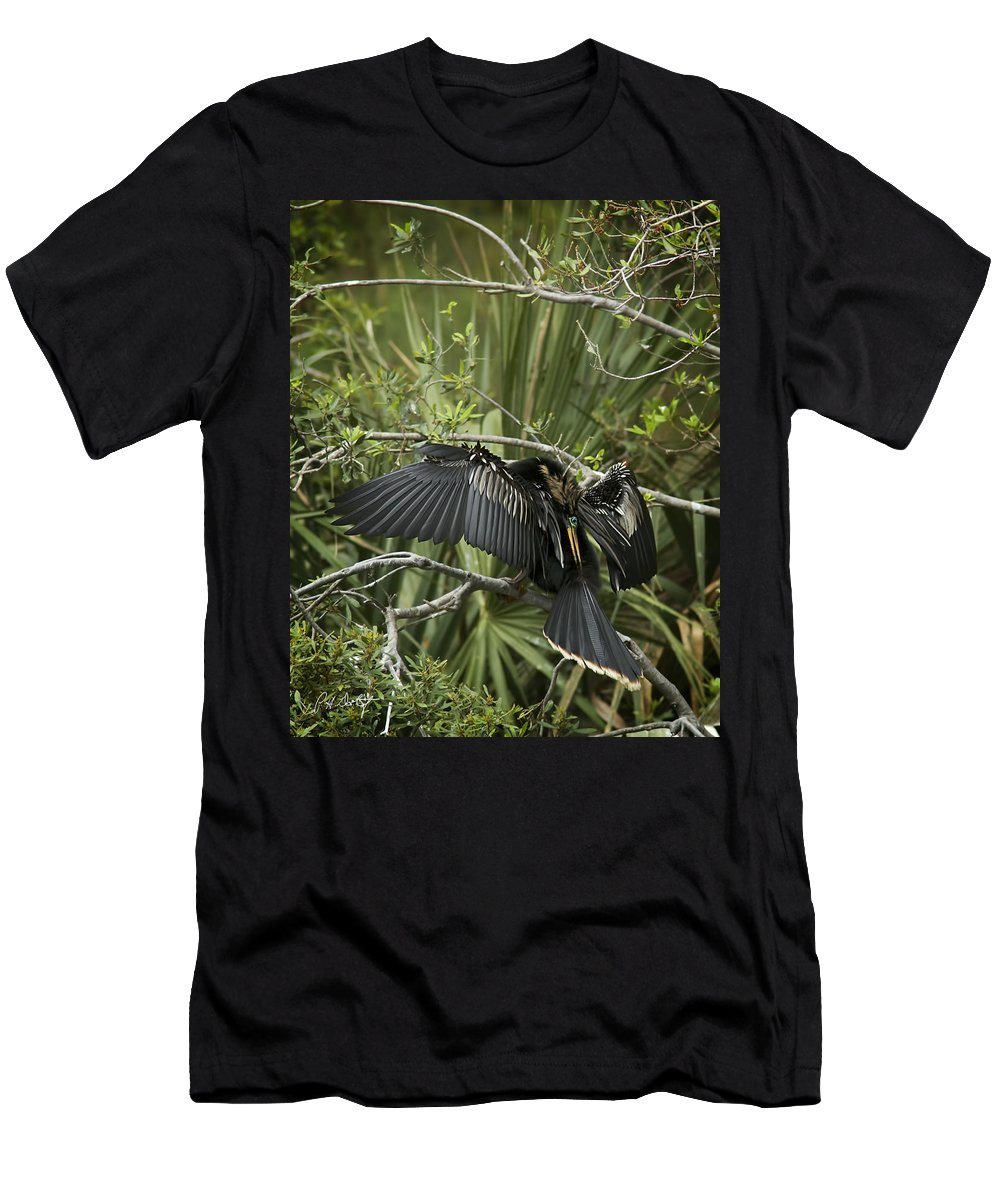 Anhinga Men's T-Shirt (Athletic Fit) featuring the photograph Anhinga Papa by Phill Doherty