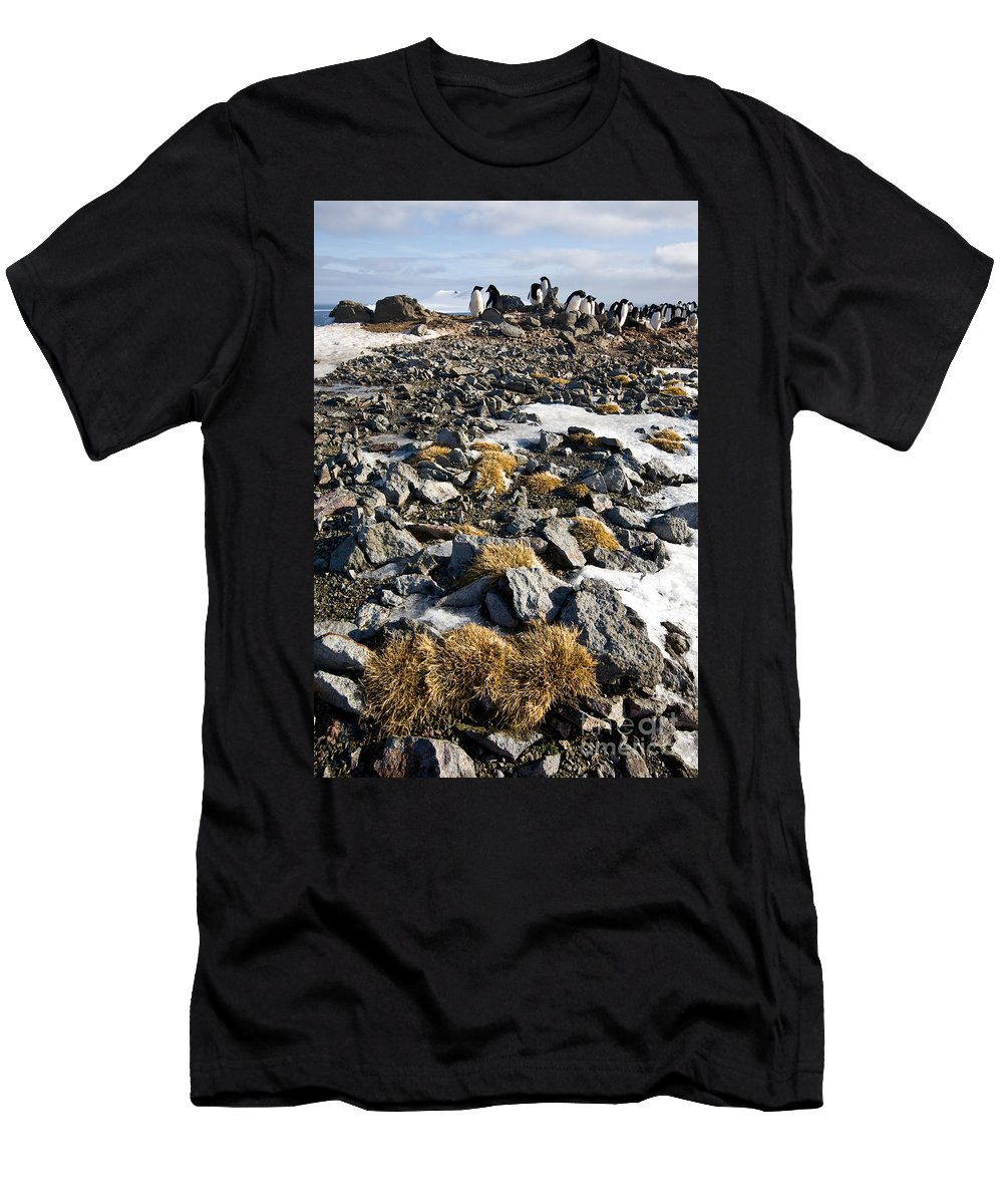 Deschampsia Antarctica T-Shirt featuring the photograph Antarctic Hair Grass by Greg Dimijian