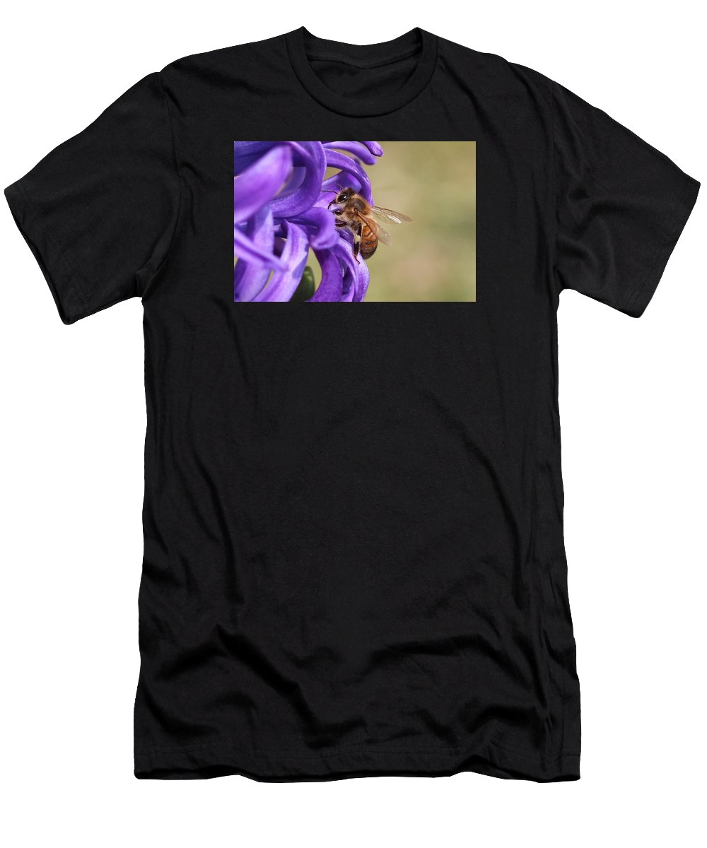 Honeybee Men's T-Shirt (Athletic Fit) featuring the photograph Anticipating The Nectar by Lucinda VanVleck