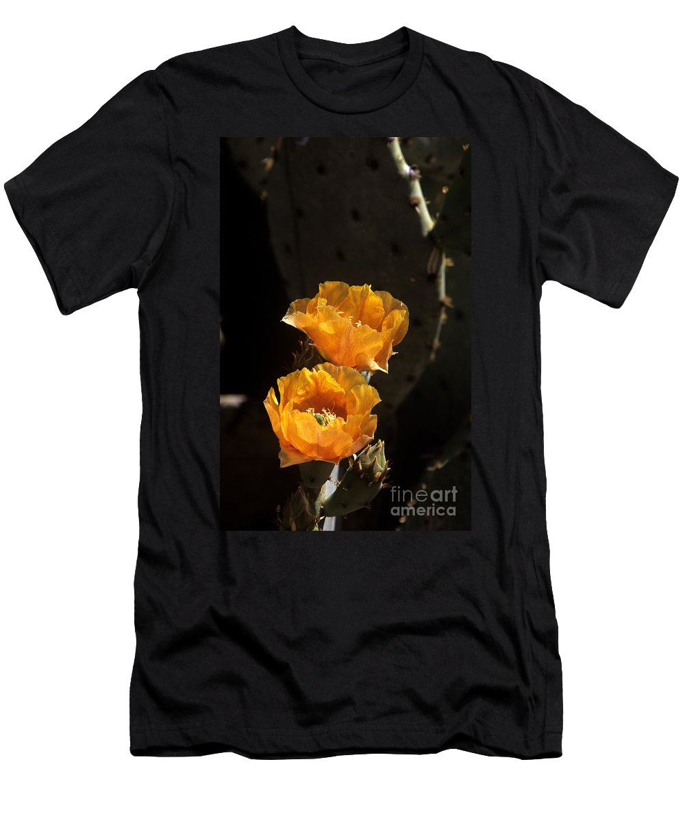 Cactus Men's T-Shirt (Athletic Fit) featuring the photograph Apricot Blossoms by Kathy McClure