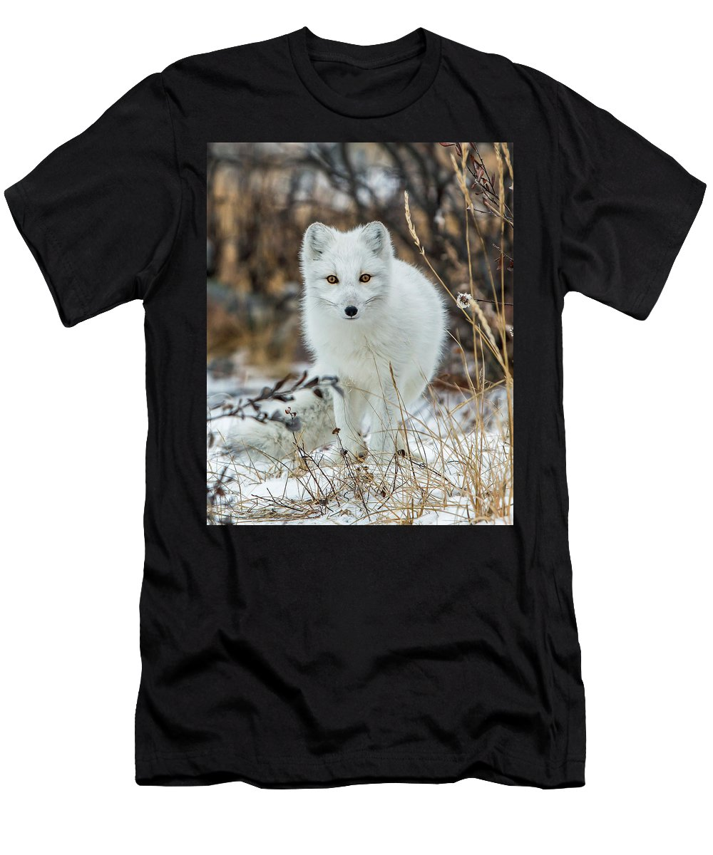 Arctic Fox Men's T-Shirt (Athletic Fit) featuring the photograph Arctic Fox by Jack Bell