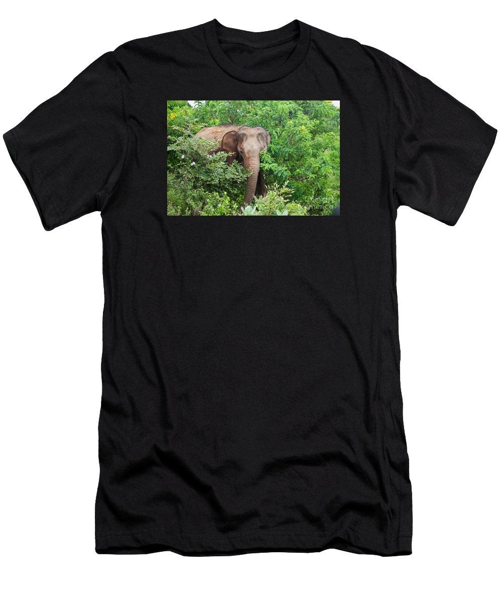 Asian Elephant Men's T-Shirt (Athletic Fit) featuring the photograph Asian Elephant Elephas Maximus by Liz Leyden