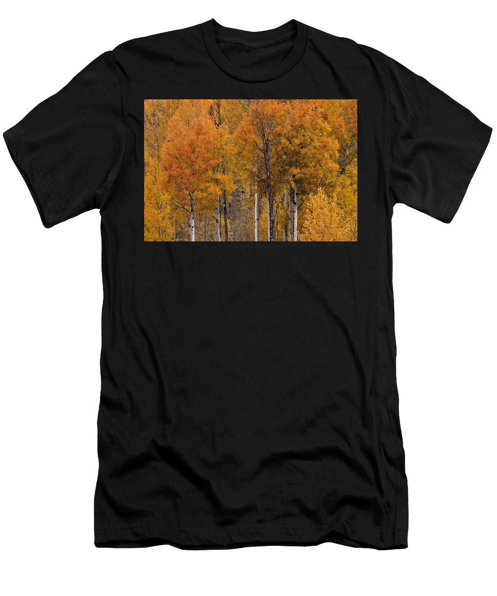 Aspens Ablaze Men's T-Shirt (Athletic Fit) featuring the photograph Aspens Ablaze by Wes and Dotty Weber