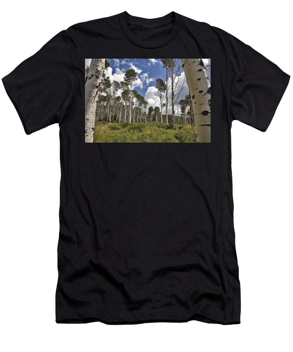 3scape Men's T-Shirt (Athletic Fit) featuring the photograph Aspen Grove by Adam Romanowicz