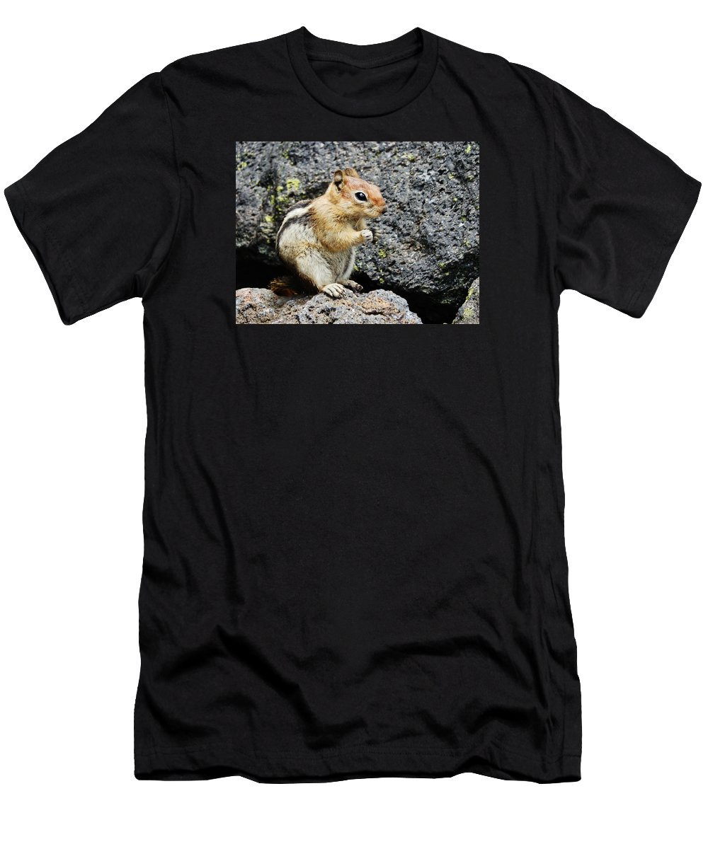 Squirrel Men's T-Shirt (Athletic Fit) featuring the photograph At Home In The Lava Beds by VLee Watson