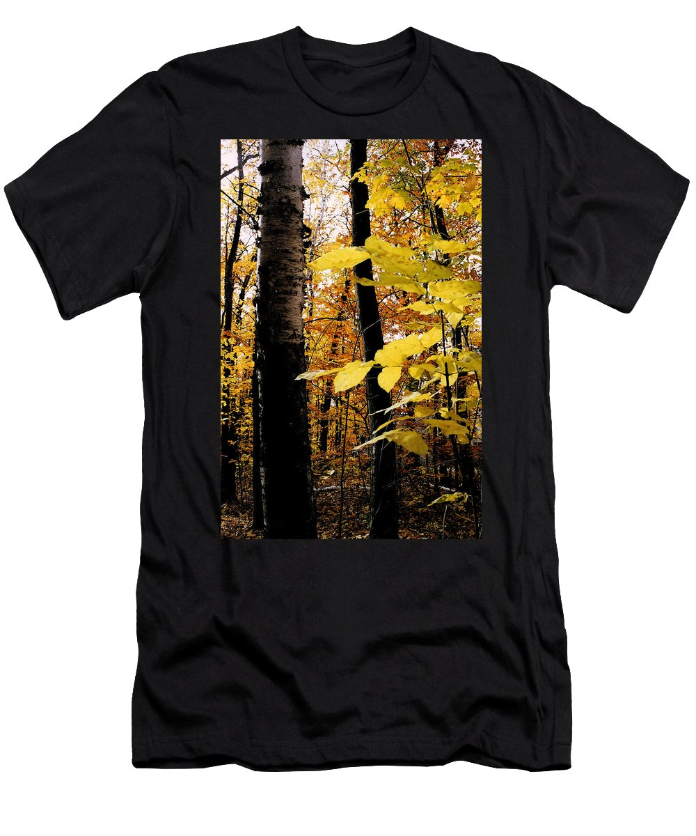 Green Men's T-Shirt (Athletic Fit) featuring the photograph Autumn Birch Trees by Michelle Calkins
