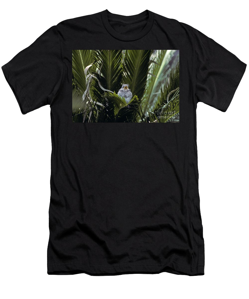 Mockingbird Men's T-Shirt (Athletic Fit) featuring the photograph Baby Mockingbird by Howard Stapleton