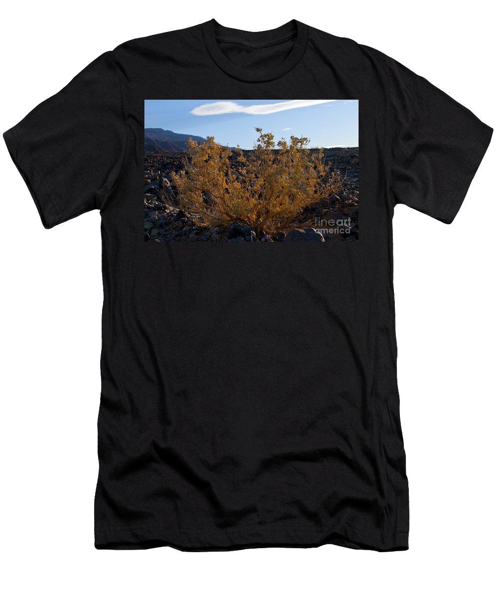 Desert Foliage Sagebrush Deserts Death Valley National Park California Plant Plants Men's T-Shirt (Athletic Fit) featuring the photograph Backlit Desert Foliage by Bob Phillips