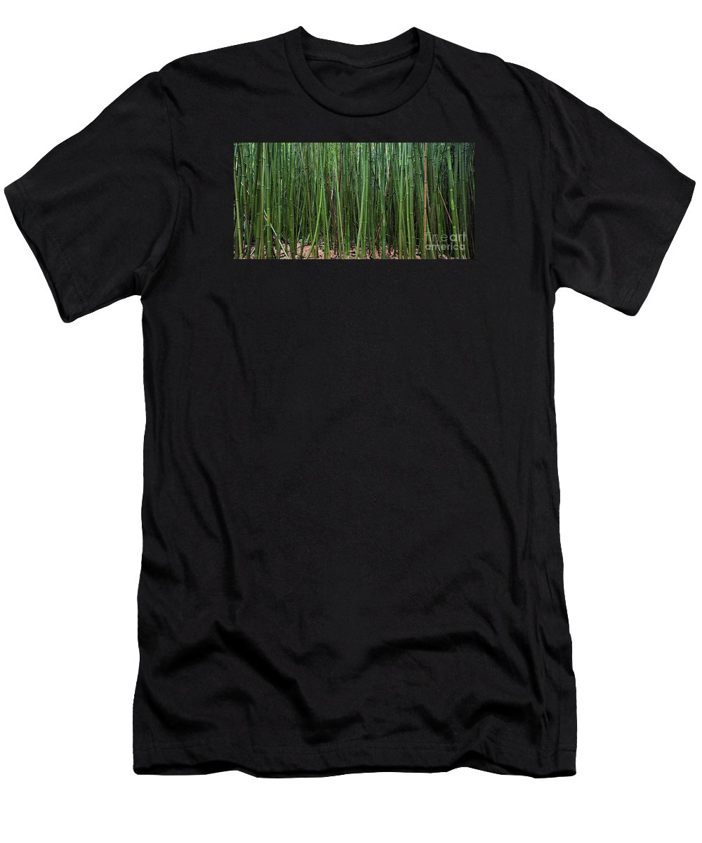 Bamboo Men's T-Shirt (Athletic Fit) featuring the photograph Bamboo Forest 3 by M Swiet Productions