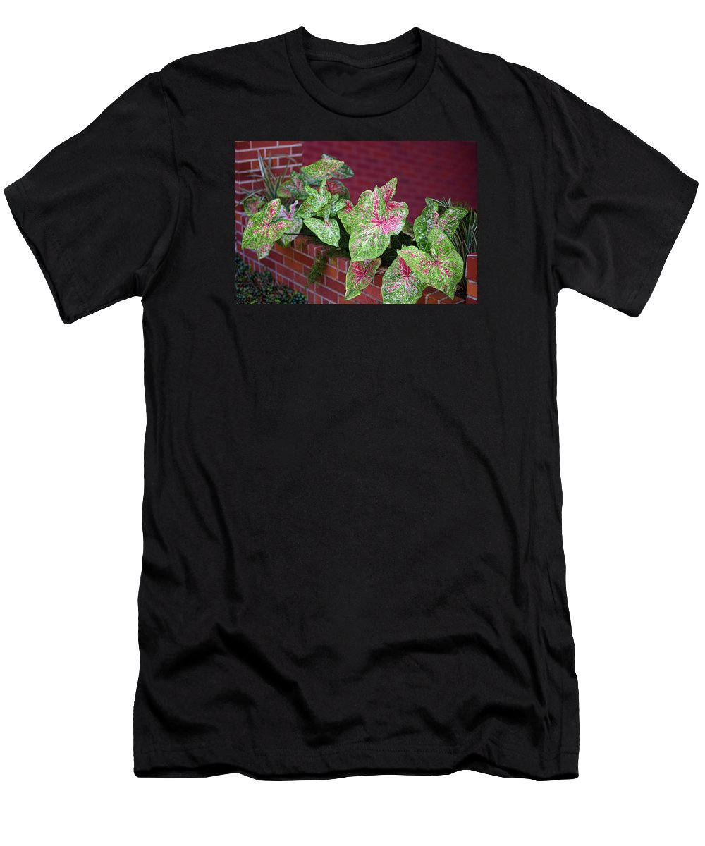 Texas Men's T-Shirt (Athletic Fit) featuring the photograph Beauty In Decorative Foliage by Linda Phelps